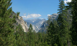Mountain View Between Pines Royalty Free Stock Image