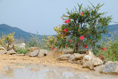 Mountain view with plant with red threads and puddle Stock Images