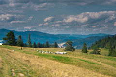 Mountain view in Polish Pieniny Royalty Free Stock Photo