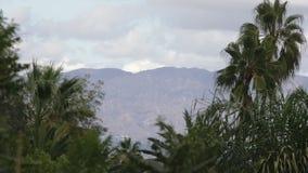 Mountain View Przez drzewek palmowych zbiory wideo