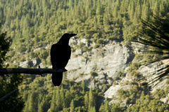 Mountain view raven Royalty Free Stock Photo