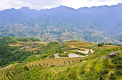 Mountain view of rice crops Royalty Free Stock Image