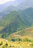 Mountain view of Sapa highland Stock Images