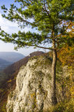 Mountain view with single tree in fall Royalty Free Stock Photo