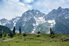 Mountain view of Sonamarg, Kashmir, India. Beautiful mountain view with snow of Sonamarg, Jammu and Kashmir state, India stock photos