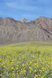Mountain view and spectacular desert gold and various spring flowers south of Furnace Creek in Death Valley National Park, CA Stock Photos