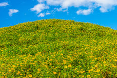 Mountain view with Tithonia diversifolia field Royalty Free Stock Images