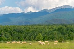 A mountain view in Transylvania area with some sheep nearby.  Royalty Free Stock Photo