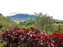 Mountain View tropical bonito Fotos de Stock Royalty Free