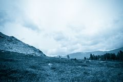 Mountain view from the valley with a pine forest. National Park, nature reserve Kuznetsky Alatau royalty free stock image