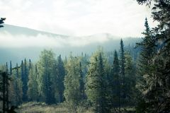 Mountain view from the valley with a pine forest. National Park. Nature reserve Kuznetsky Alatau stock image
