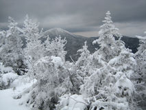 Mountain view in winter, with trees Royalty Free Stock Image