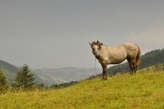 Mountain View y un caballo Imagen de archivo libre de regalías
