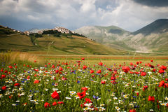 Mountain village above valley flowers Royalty Free Stock Photography