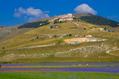 Mountain village over the cornflowers field Stock Image