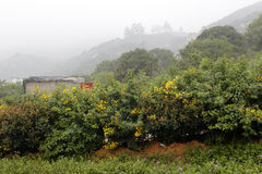 Mountain village planting surattensis. Mountain village in the rain, longhai city, china Stock Photography