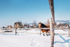 Mountain village winter landscape with red horse Stock Images