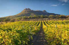 Mountain and Vineyard. Royalty Free Stock Photography