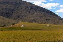 Mountain Vineyard Small House Stock Image