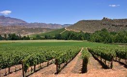 Mountain vineyards Stock Photos