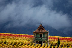 Mountain Vinyard. Small cottage among the autumn colored vines of a mountain vineyard  with scudding clouds and forested mountains in the background Royalty Free Stock Photo