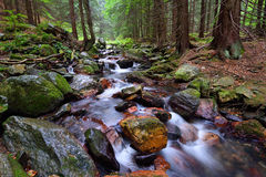 Mountain virgin forest with a swift stream Royalty Free Stock Images