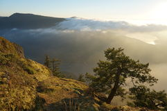 Mountain vista with tree. Taken from the top of Mount Maxwell, Salt Spring Island, BC, Canada Royalty Free Stock Images