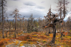 Mountain vuottovaara, Karelia, Russia Stock Photography
