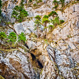 Mountain wall and pine trees Royalty Free Stock Image