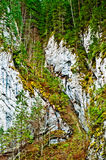Mountain wall and pine trees Stock Images