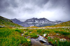 Mountain Water Stream. Mountain Landscape with water stream in the foreground and white flowers on the meadow Stock Photo