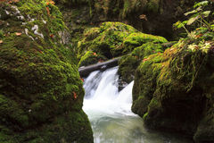 Mountain waterfall. fast stream water. In the Transylvania Royalty Free Stock Images