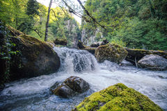 Mountain Waterfall River with deep forest Landscape Royalty Free Stock Photos