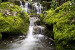 Mountain waterfall at spring Stock Photo