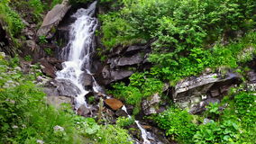 Mountain waterfall. Mountain stream with a waterfall in the fairy forest of the Carpathians stock footage