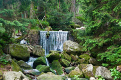 Mountain waterfall in the wild forest Royalty Free Stock Photo