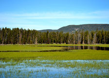 Mountain wetlands Stock Image