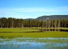 Mountain wetlands Stock Image