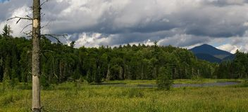Mountain wetlands. A view across a swampy area or wetlands with forests and mountains in the background Stock Image