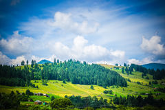 Mountain on which grows spruce forest andsky with white clouds Stock Image