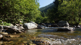 Mountain whirling creek. Royalty Free Stock Images