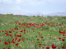Mountain. Whit flower Stock Image