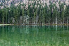 mountain whiteside Стоковые Фотографии RF