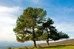Mountain wiev with beautiful trees Royalty Free Stock Photos