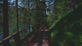 Mountain wild forest trail near Braies lake, Dolomites, Italy stock footage