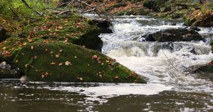 Wild river Doubrava in fall colors, picturesque landscape stock footage