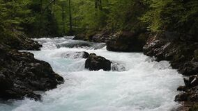 Mountain wild river flowing through the green forest