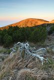 Mountain wilderness Royalty Free Stock Photo
