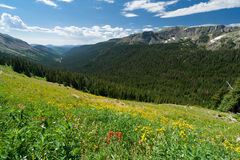 Mountain Wildflower Landscape Royalty Free Stock Photos