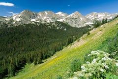Mountain Wildflowers Landscape Stock Photos
